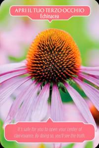 2-echinacea
