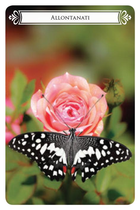 carte_farfalle_CARDS_BOZZA_light-2